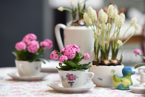 Spring decoration with Coffee dishes