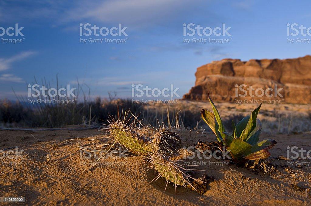 Spring Desert Cactus in Moab Utah` royalty-free stock photo