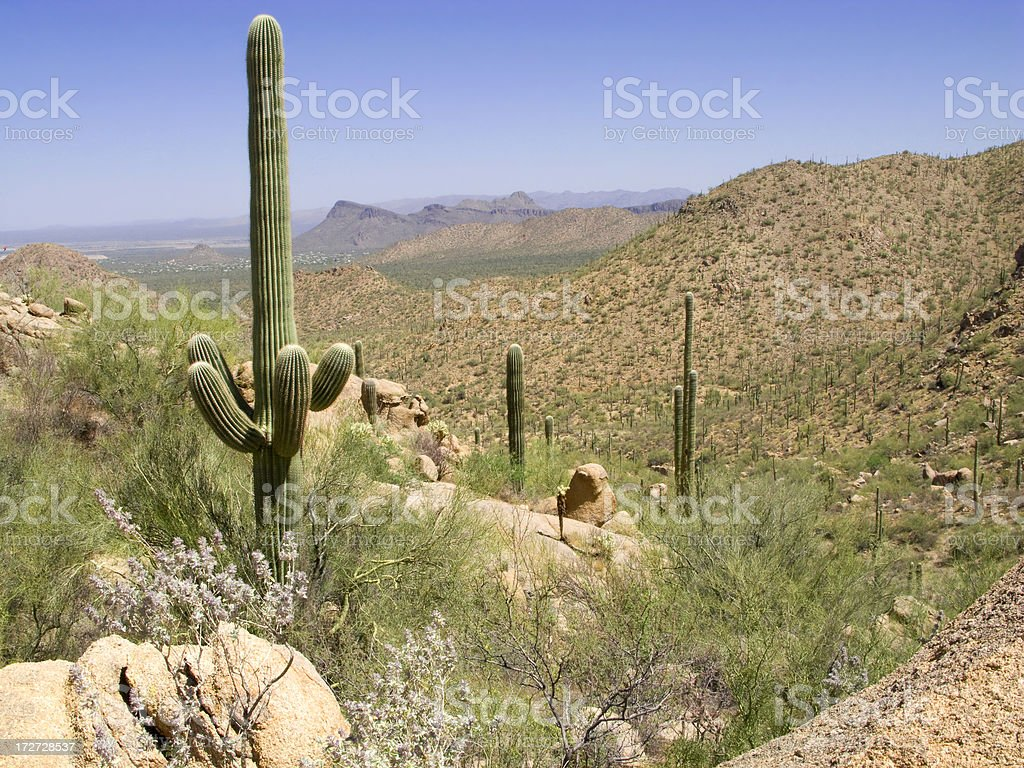 Spring Desert Valley View royalty-free stock photo