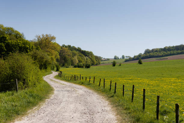 Spring dirt road next to meadow with dandelions. stock photo