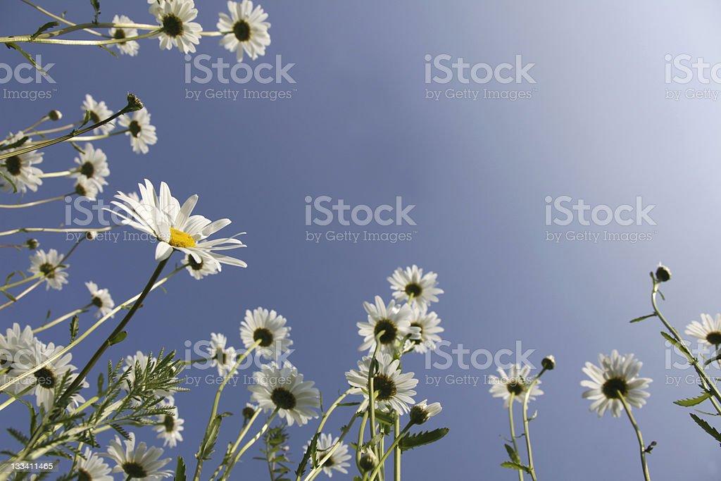 Spring Dream royalty-free stock photo