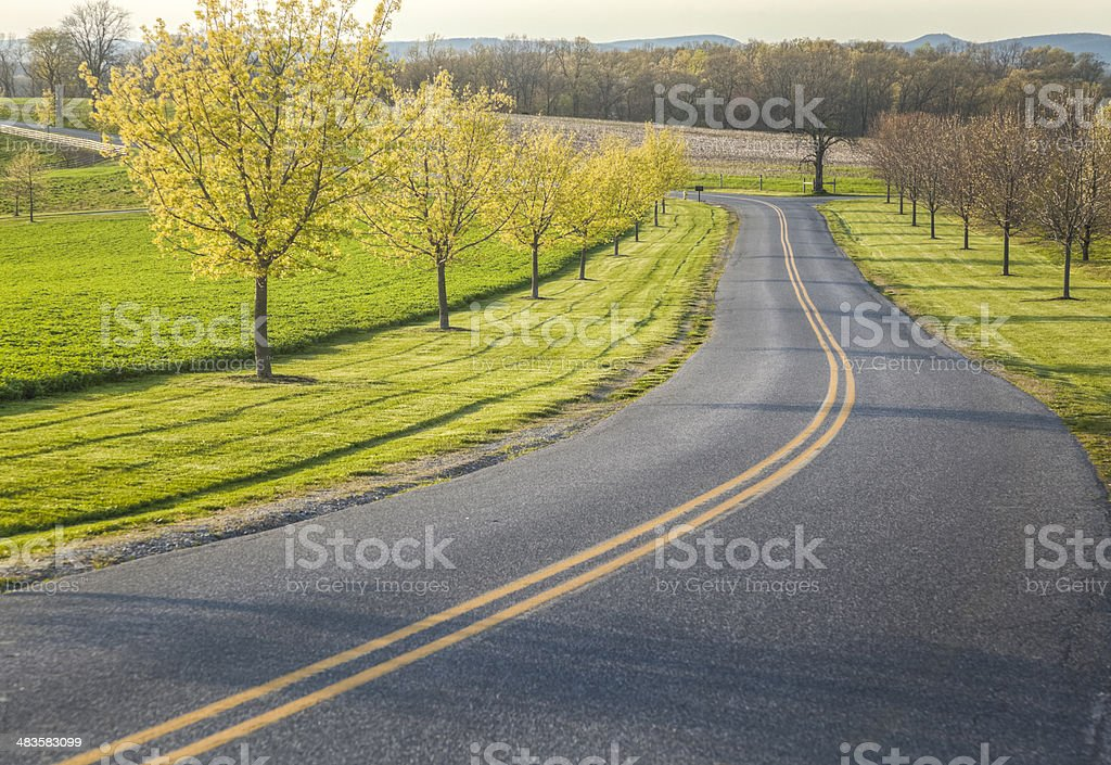 Spring Drive along a Country Lane stock photo