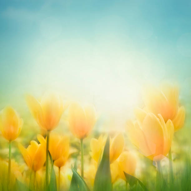 Spring Easter background stock photo