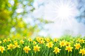 イースター春の背景