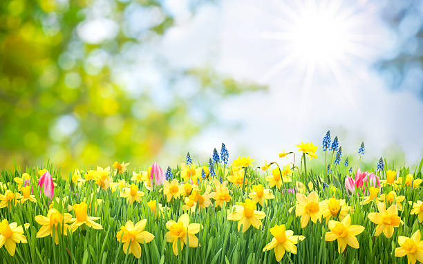 spring easter background - spring stock pictures, royalty-free photos & images