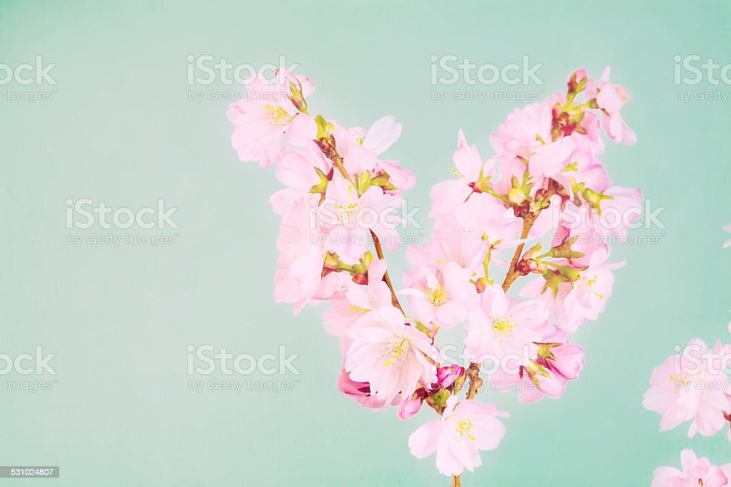 Spring easter card stock photo