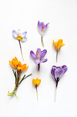 istock Spring, Easter floral composition. Yellow and violet crocuses flowers on white wooden background. Styled stock photo. Flat lay, top view 935706088