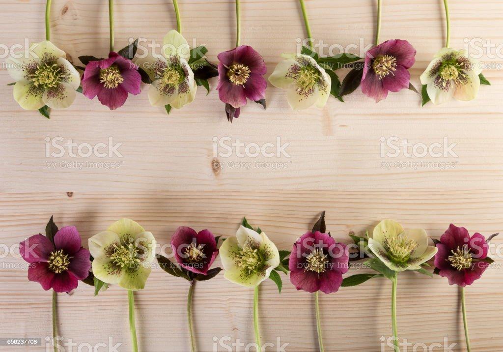 Spring easter flower frame vintage background with lenten roses flowers over light wood stock photo