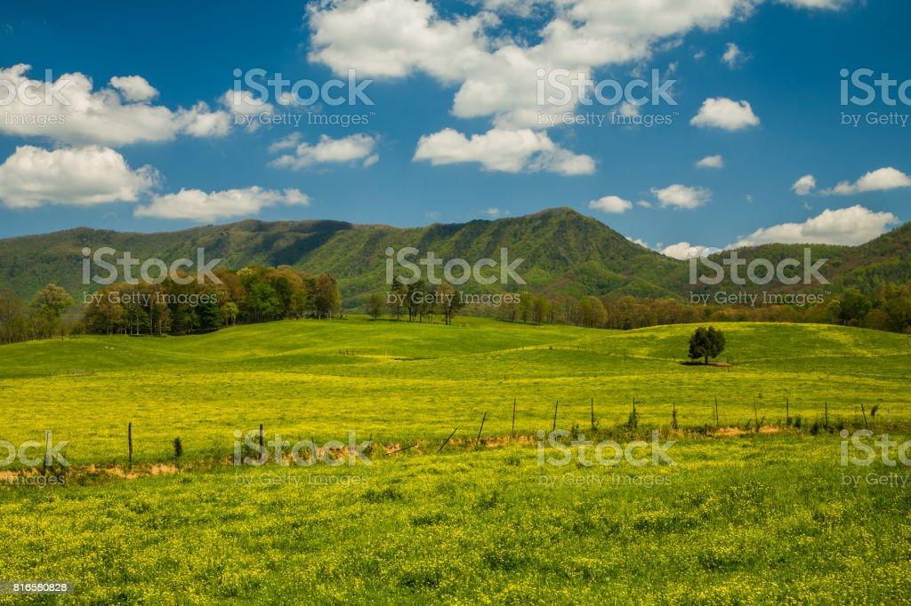 Spring, English Mtn Area stock photo