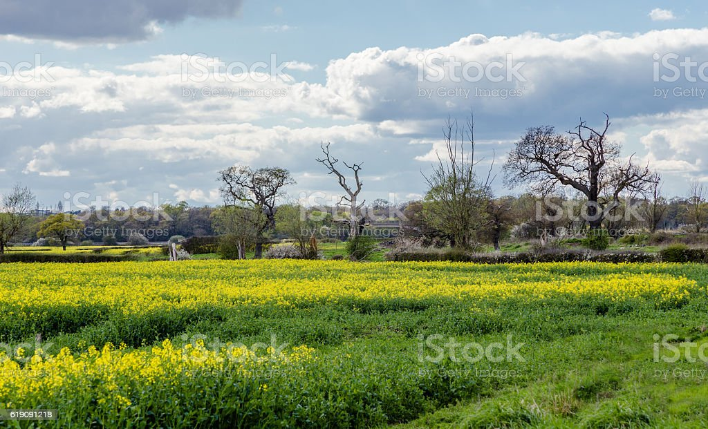 Spring farmland in the Essex countryside stock photo