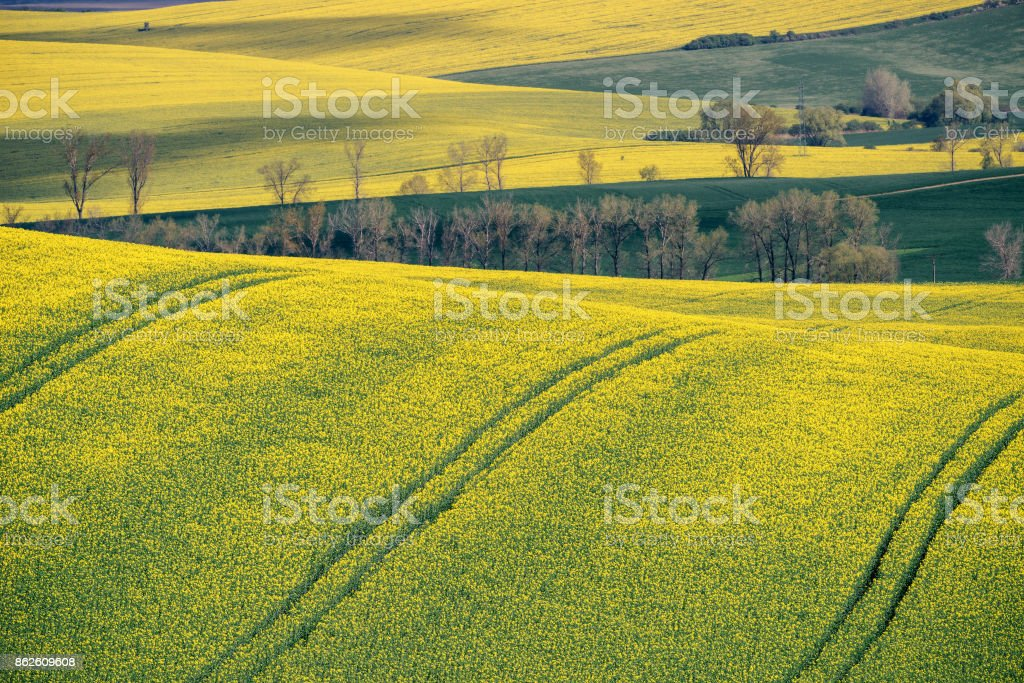 Spring farmland on hills of South Moravia. Czech green and yellow spring fields. Rural agriculture scene stock photo