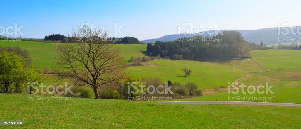 Spring field of grass and tree stock photo