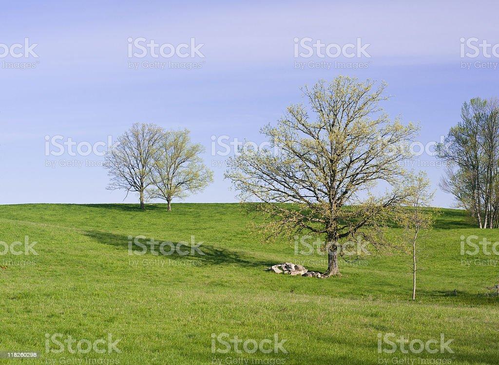 Spring Field Panorama stock photo
