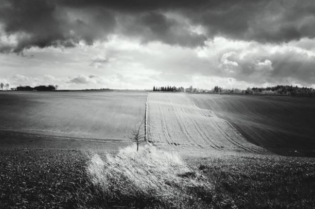 Wiosenne pole – zdjęcie