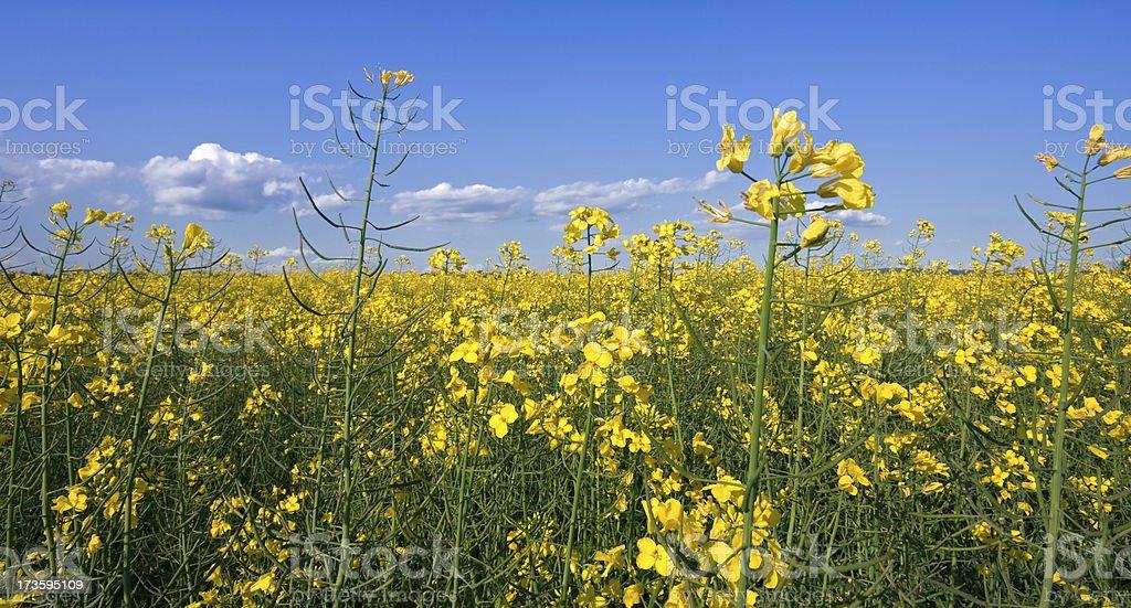 Campo di primavera - foto stock