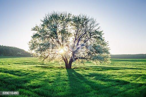 istock Spring field 539016480