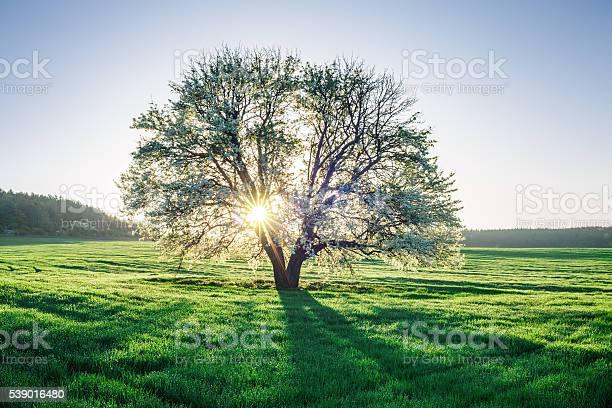 Spring field picture id539016480?b=1&k=6&m=539016480&s=612x612&h=bt2eh4ydftco7hwglzjypgmxjkfl1ry2uxhsmugff6g=