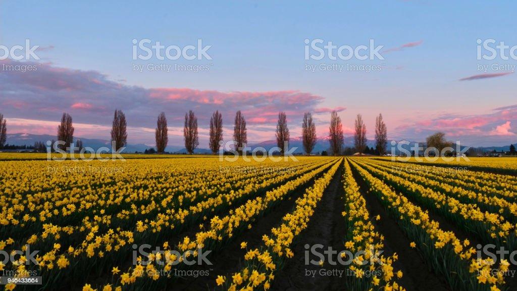 Frühling Felder und Gasse bei Sonnenuntergang. – Foto