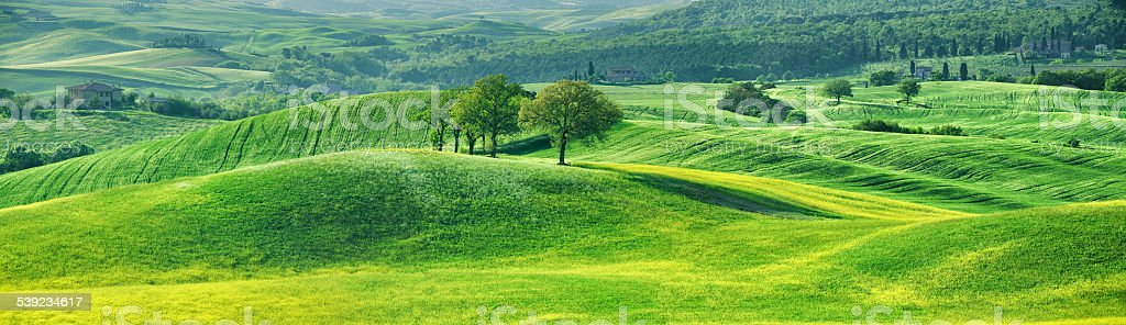 Spring fields in Tuscany royalty-free stock photo
