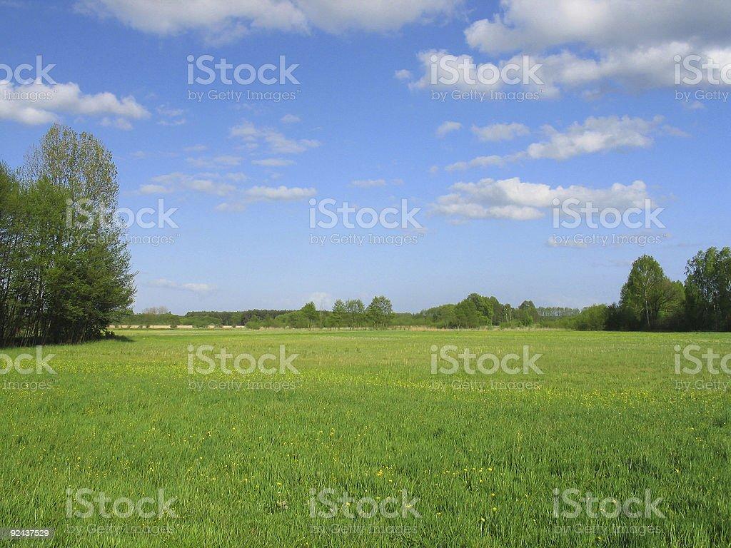 Spring fields landscape stock photo
