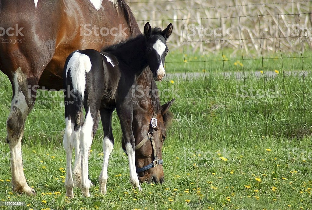 Spring Filly stock photo