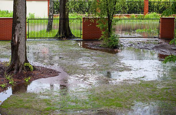 spring flood - islak stok fotoğraflar ve resimler