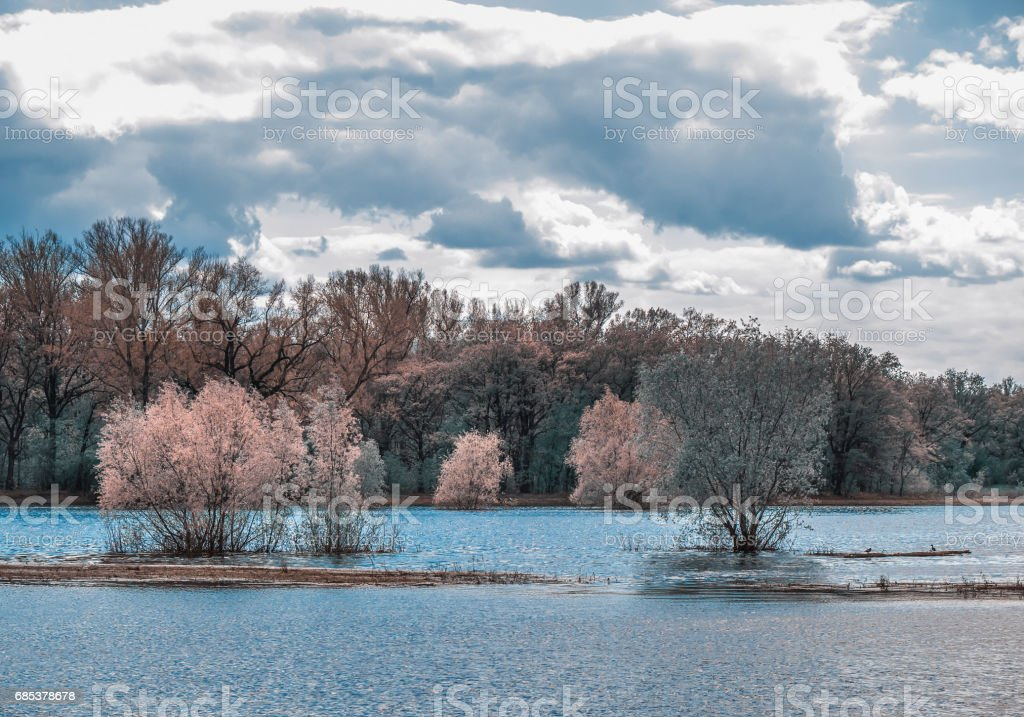 Spring flood. foto de stock royalty-free