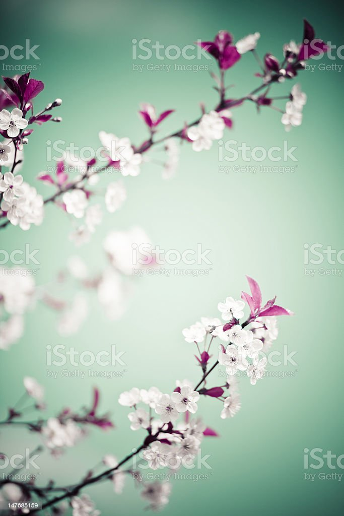 Spring floral royalty-free stock photo