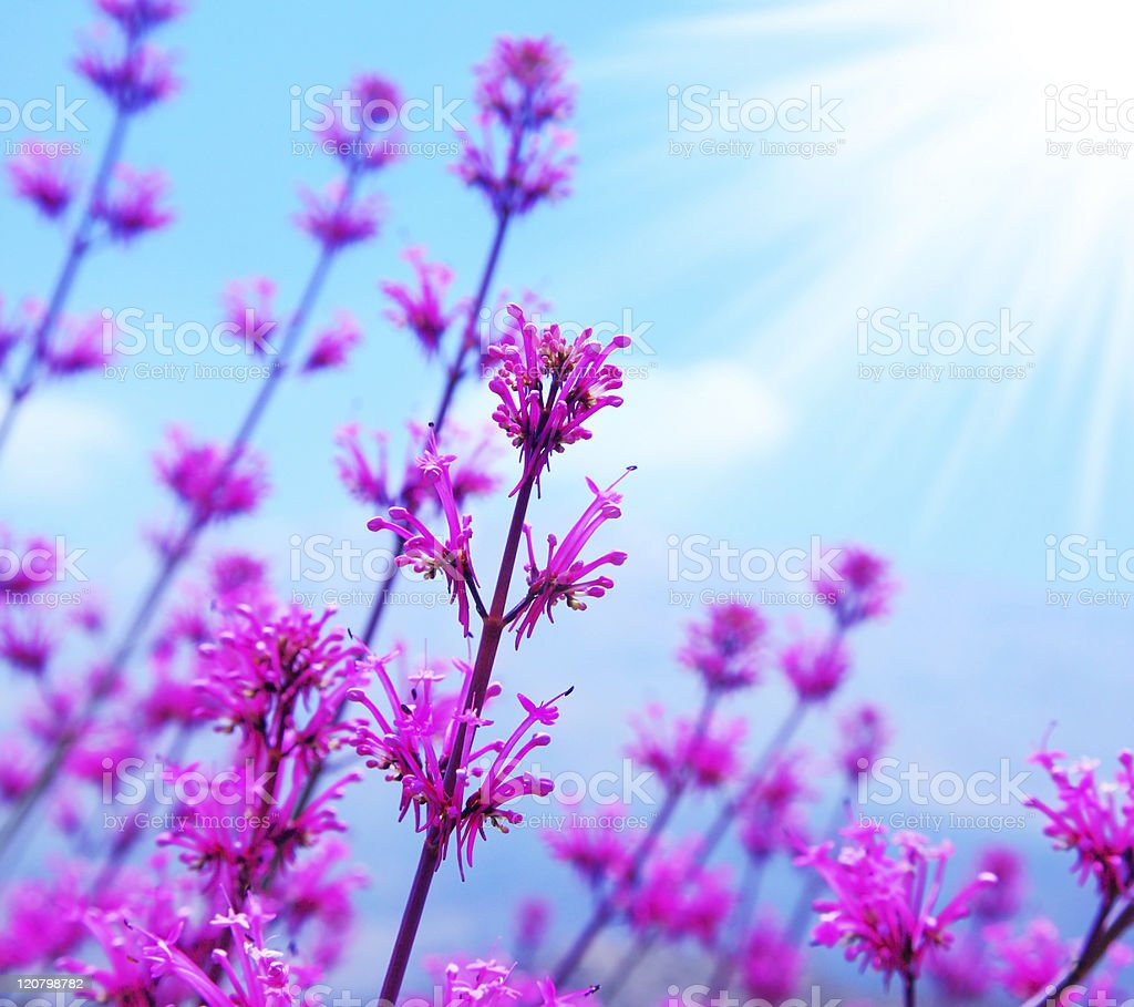 Spring flower background royalty-free stock photo