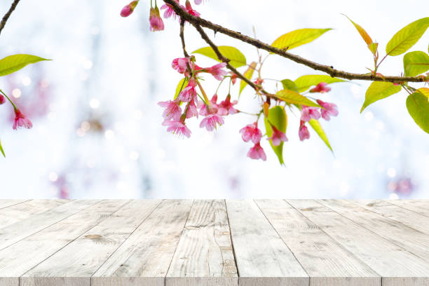 spring flower background - sakura background stock photos and pictures