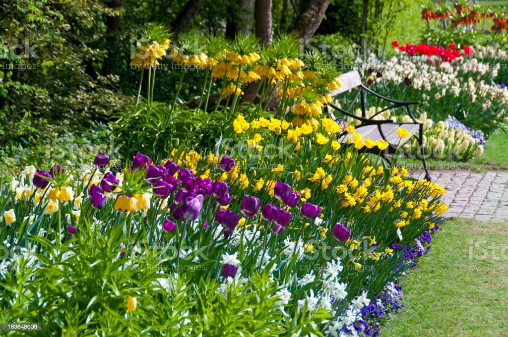 Spring Flower Bed royalty-free stock photo