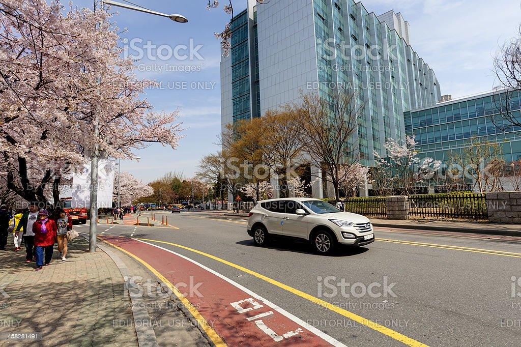 Spring Flower Festival in Seoul royalty-free stock photo