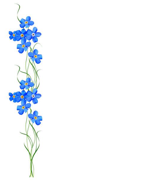 miosótis de flor de primavera - miosótis - fotografias e filmes do acervo