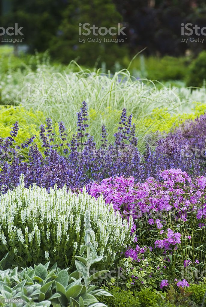 Spring flower garden - II royalty-free stock photo
