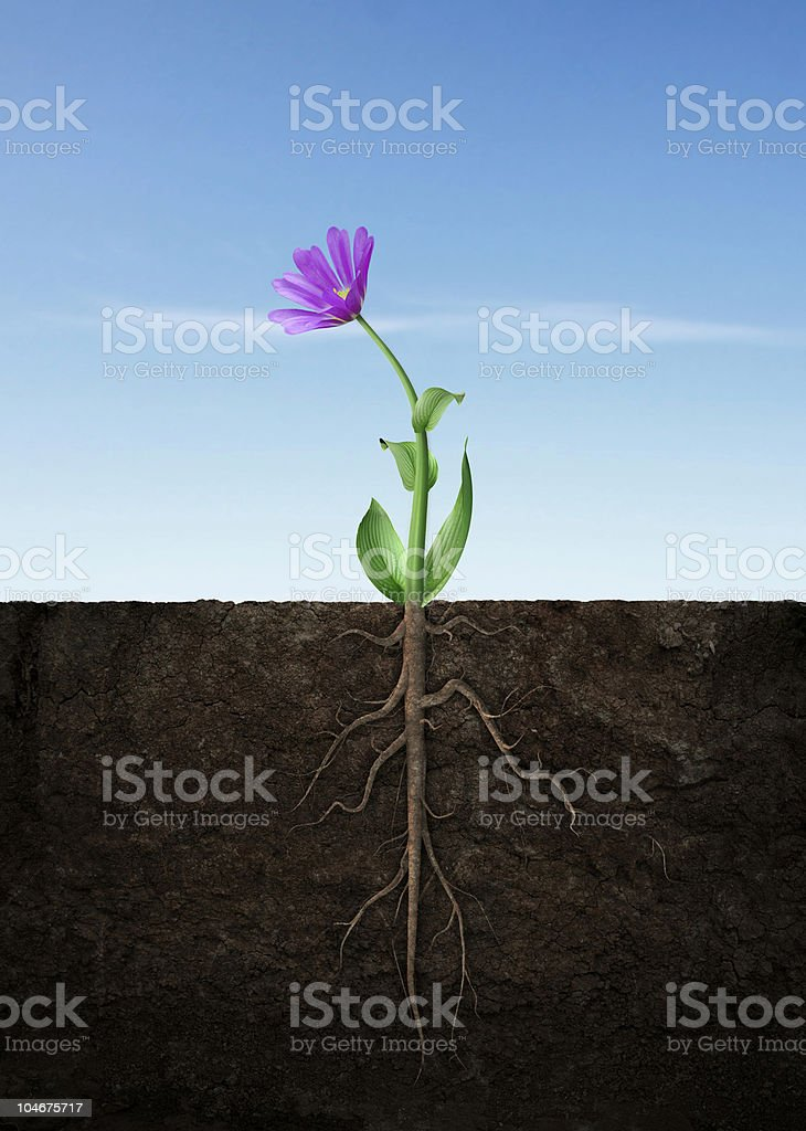 Spring flower grow royalty-free stock photo