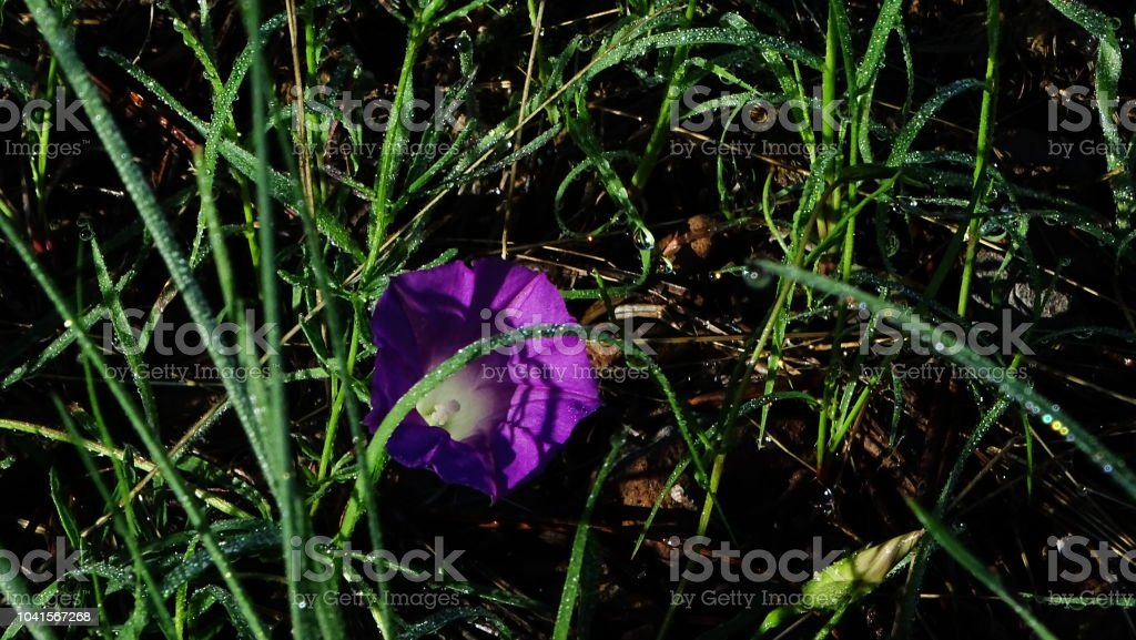 Spring flower in forest after rain early morning in arizona stock spring flower in forest after rain early morning in arizona royalty free stock photo mightylinksfo