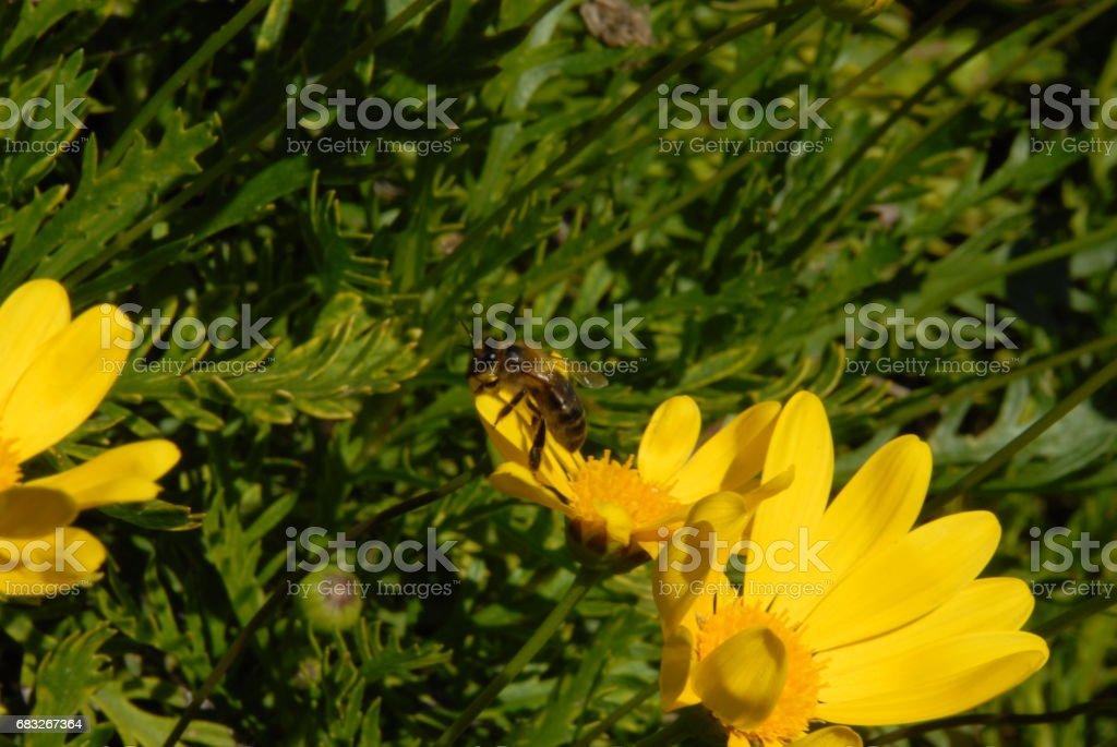 Frühlingsblume in Spanien Lizenzfreies stock-foto