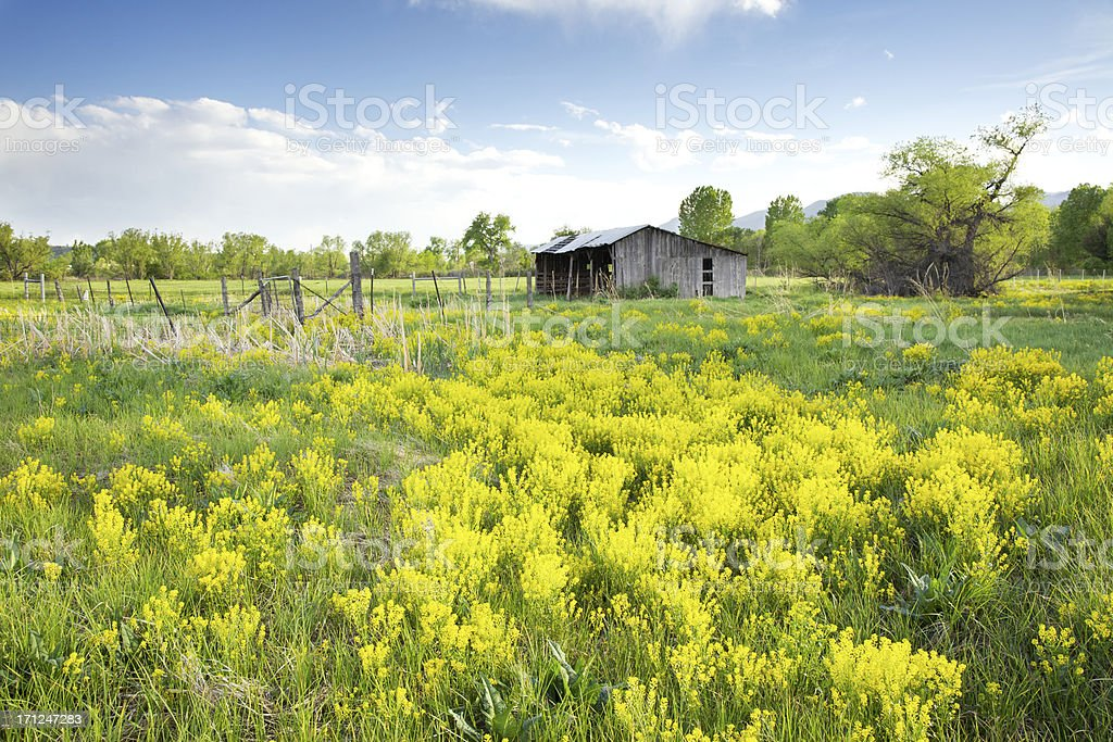 Spring Flower Meadow on Historic Ranch royalty-free stock photo