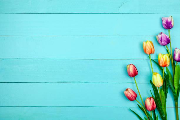 Spring flower of multi color tulips on wood flat lay image for card picture id1131782791?b=1&k=6&m=1131782791&s=612x612&w=0&h=zf1fugukgyszo1hnfjds1rhcjwt f5le2ux512tsut8=