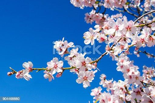 istock Spring flower 904468880