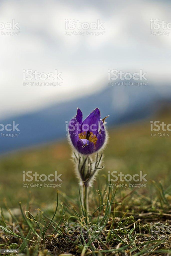 Frühling flower – Foto