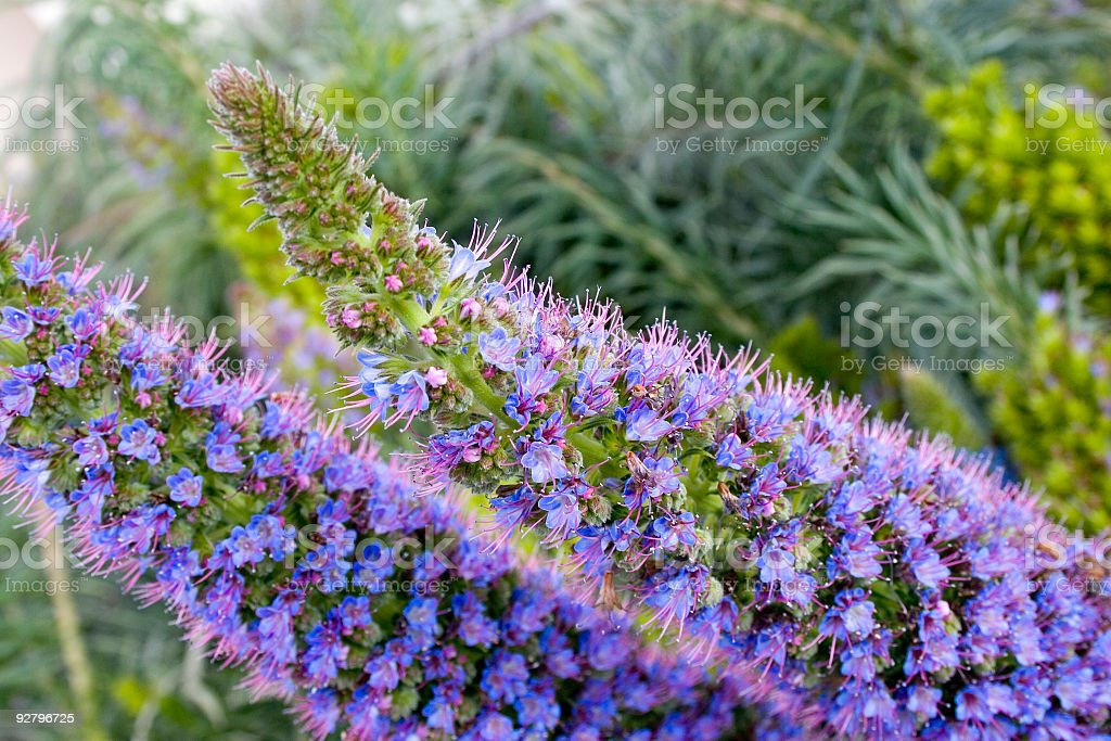 Spring Flower stock photo