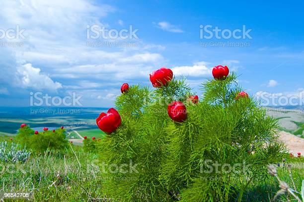 Foto de Flor De Primavera e mais fotos de stock de Azul