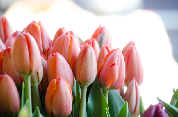 Spring flower season at Seattle farmer market stock photo