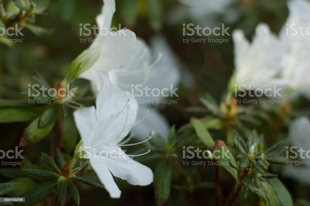 Spring flowering of subtropical plants. stock photo