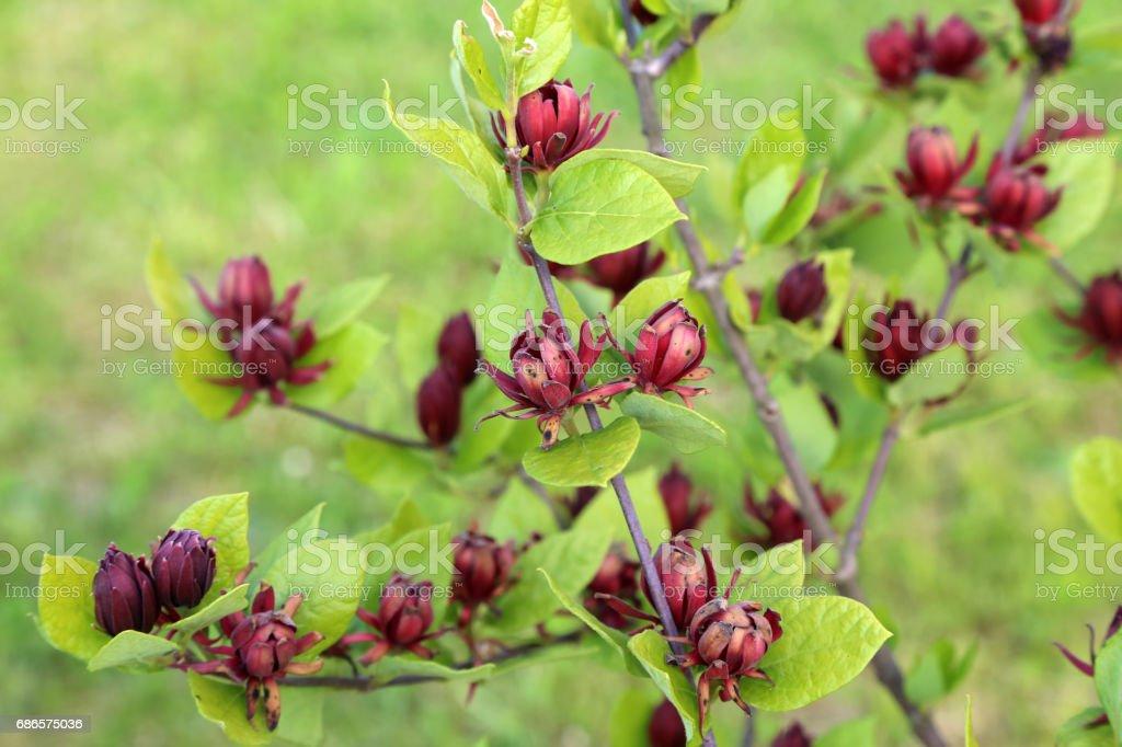 Spring flowering royaltyfri bildbanksbilder