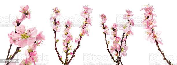 Spring flowers almond tree blossoms green leaves picture id523051850?b=1&k=6&m=523051850&s=612x612&h=mkfvxkamxj 6pfinrtxp fu3mn 7jb 1rs7csk6qf0i=
