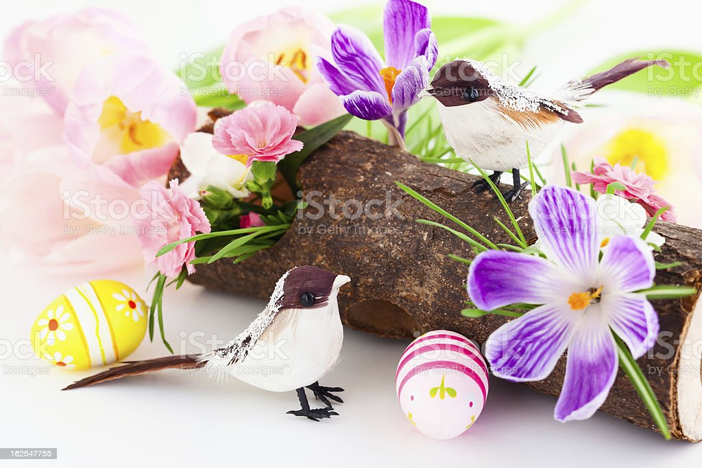spring flowers and birds royalty-free stock photo