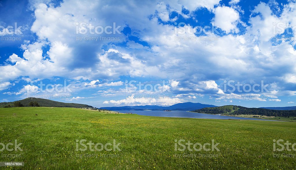 Spring flowers and blue sky. royalty-free stock photo