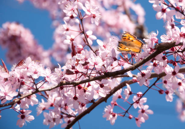 Spring Flowers and Butterfly stock photo